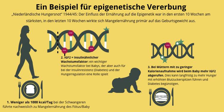 Beispiel für epigenetische Vererbung